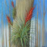 February Bromeliads